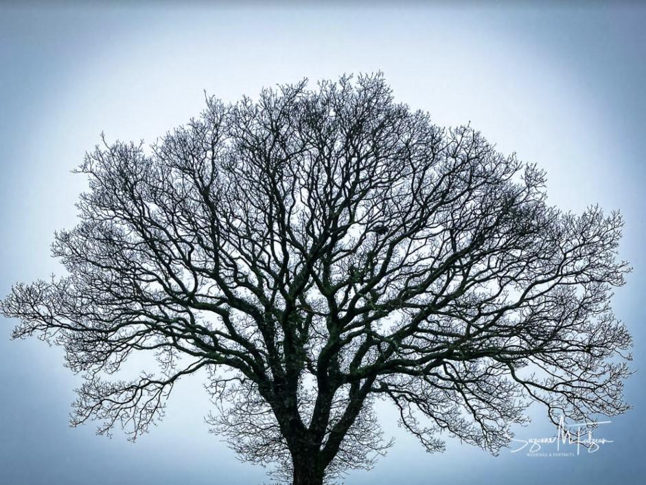suzie tree