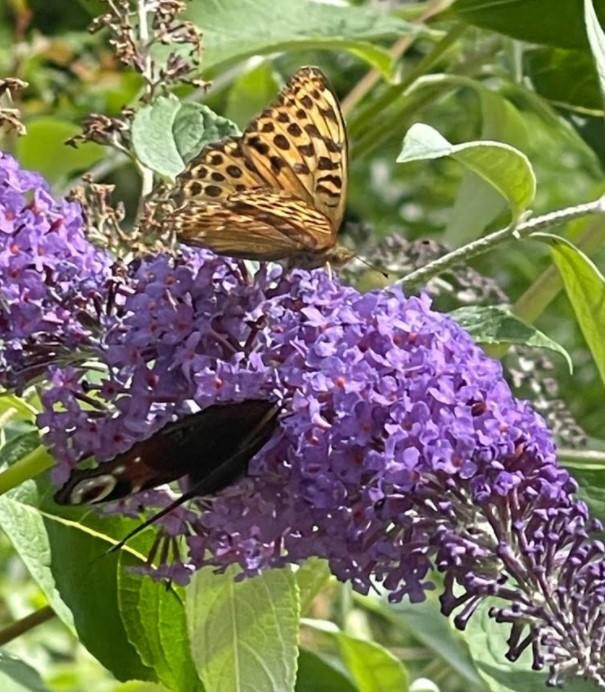 2more butterflies